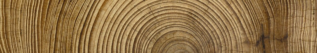 Oak tree rings